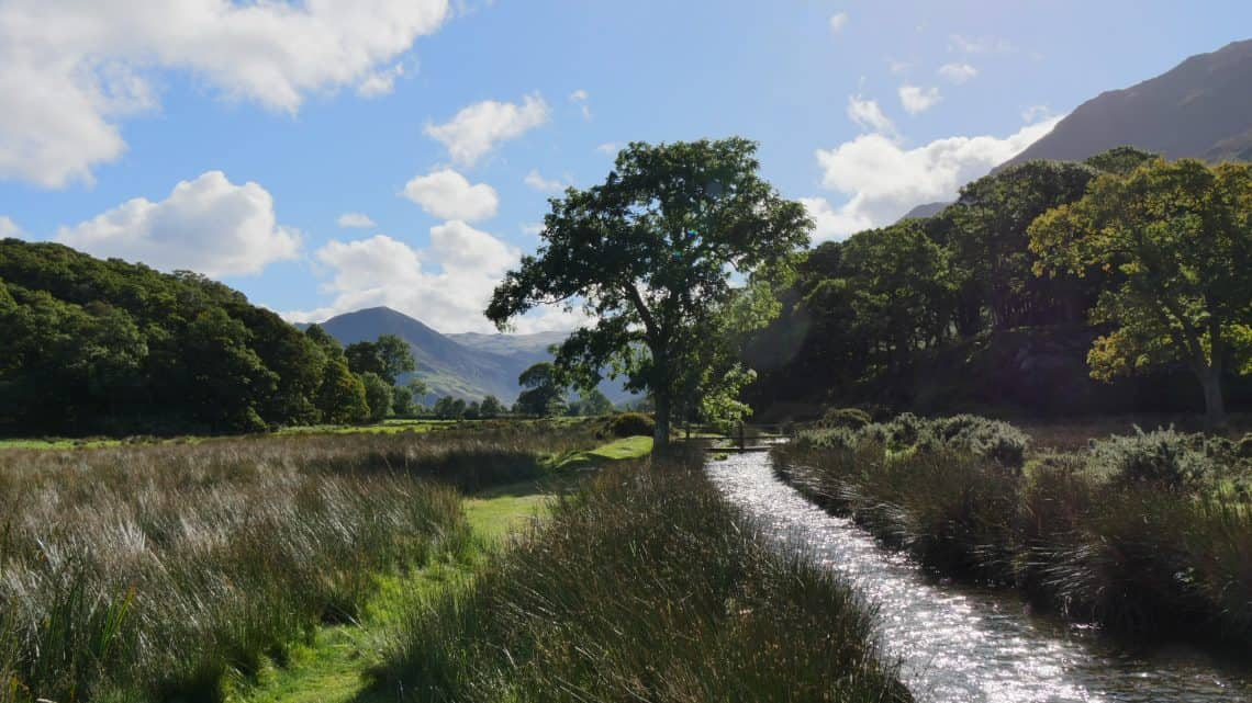 Stream running past a tree with mountains and blue sky behind in the Lake District