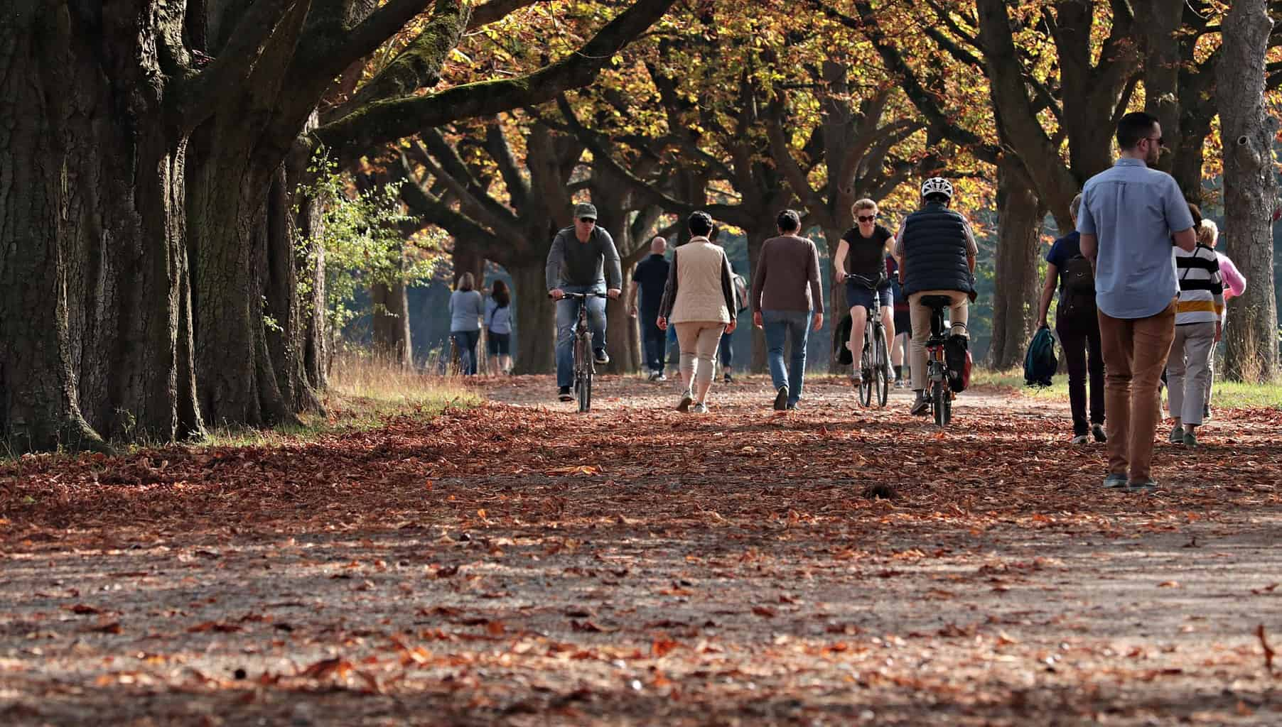 People walking and cycling under trees with autumn leaves around