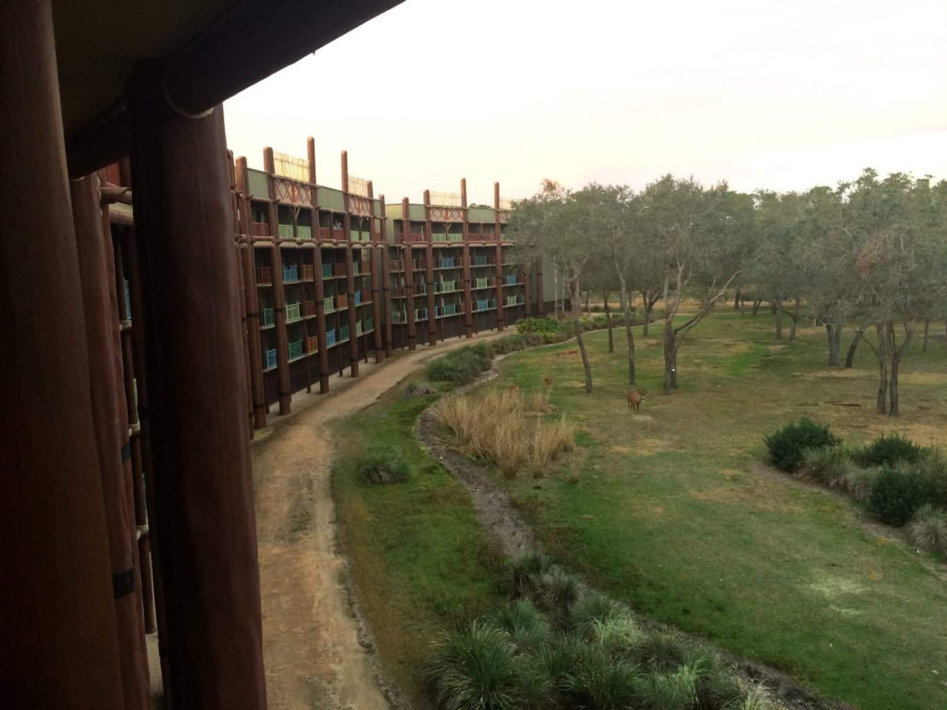 Disney\'s Animal Kingdom Lodge Review - girl gone london