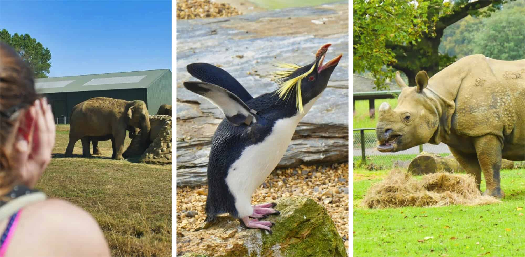 ZSL Whipsnade Zoo Review