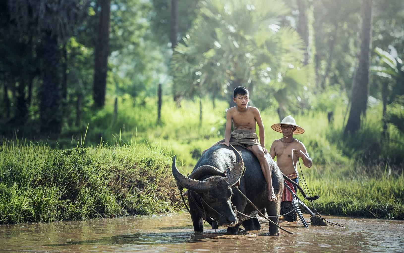 Two shirtless men riding on a buffalo in a river