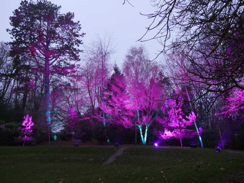 Trees lit up purple