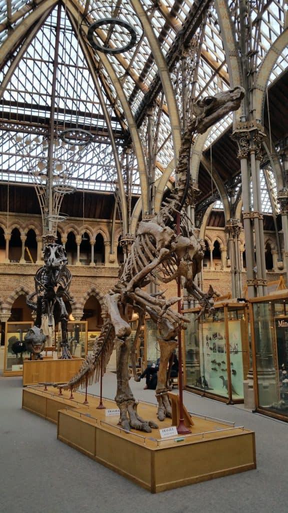 Skeleton of Dinosaur