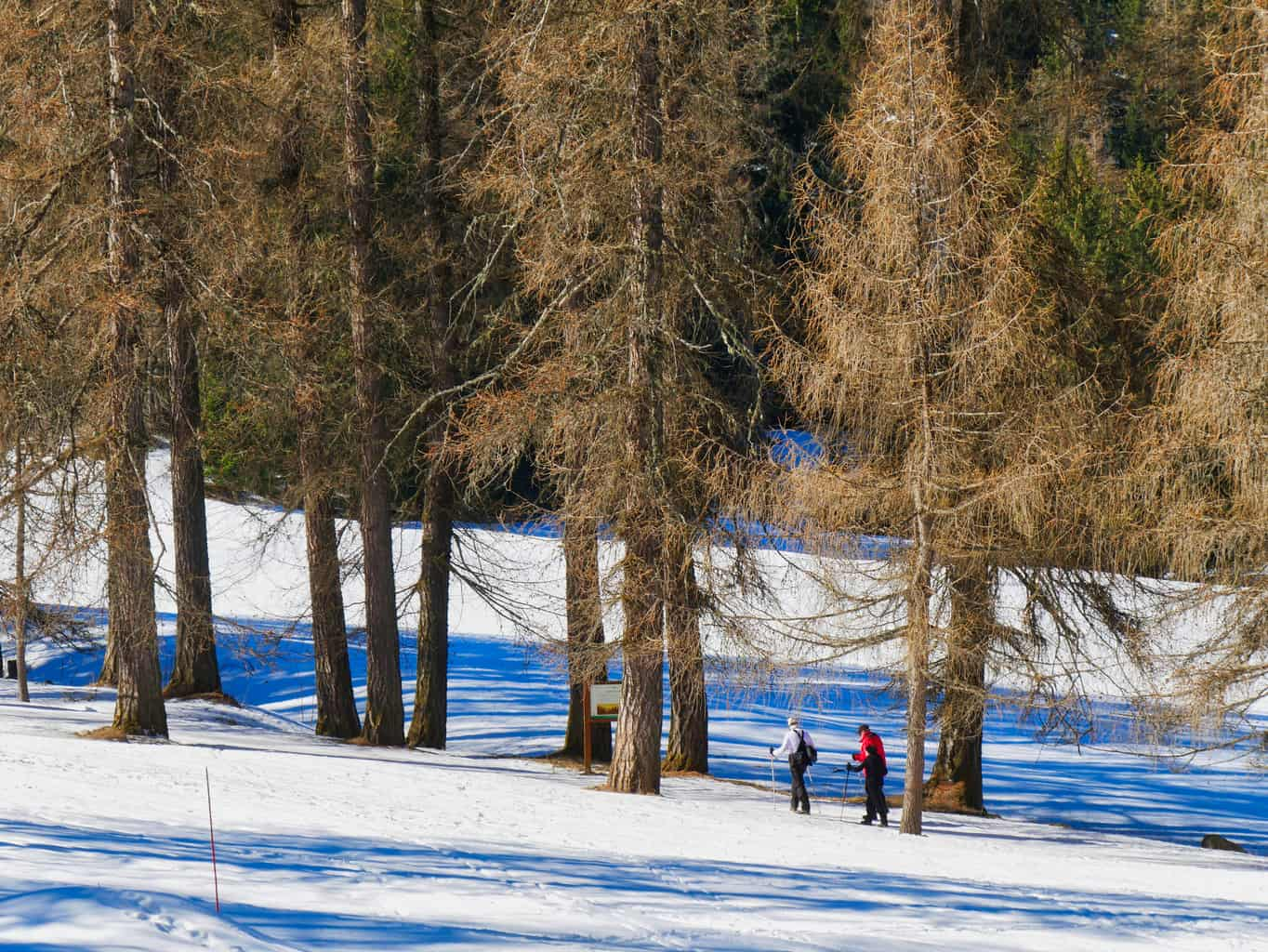 Hikers in the Site Nordique in Paradiski surrounded by trees and snow