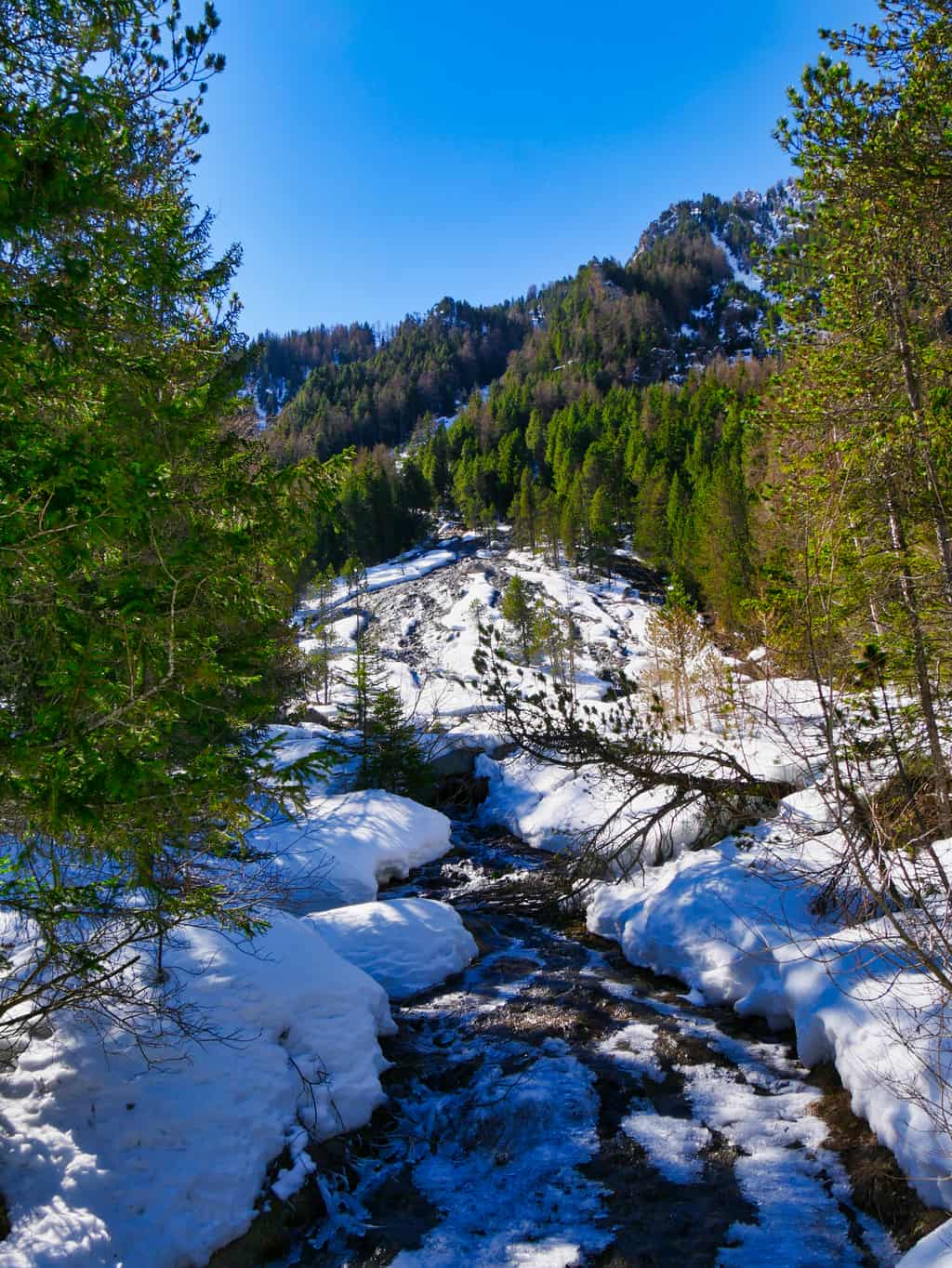 Snowy stream surrounded by green trees and deep blue sky