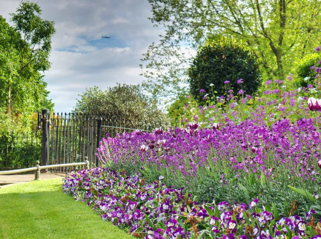 A row of purple flowers with a black iron fence behind and a plane in the sky