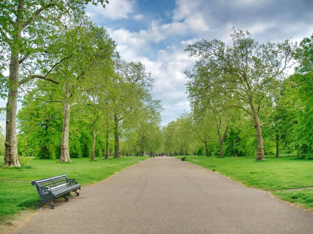 A bench on a path in Hyde Park, London, with trees eiher side and blue sky