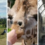 23 (Not Stressful) Best Things to Do with Toddlers in London