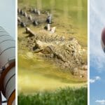 33 Best Things to Do in Orlando for Adults