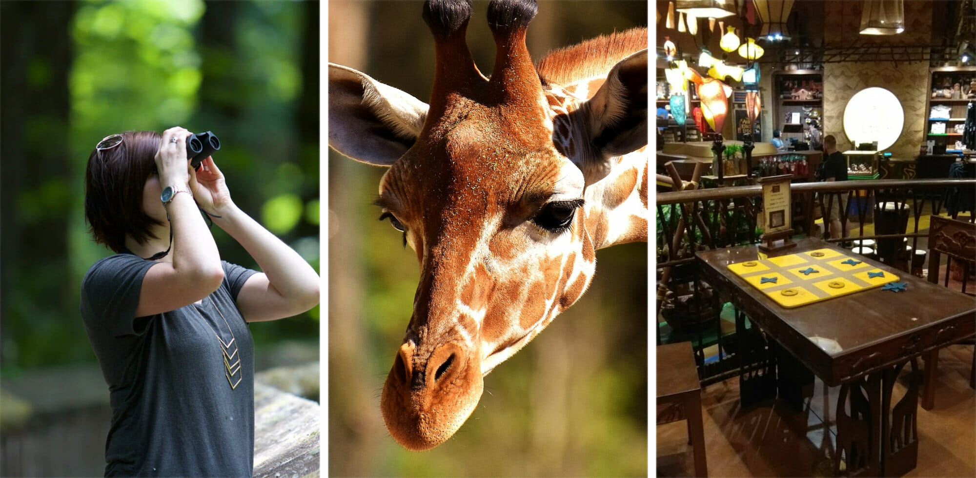 Things to Do at Disneys Animal Kingdom Lodge The Ultimate Guide for Families Couples and Kids
