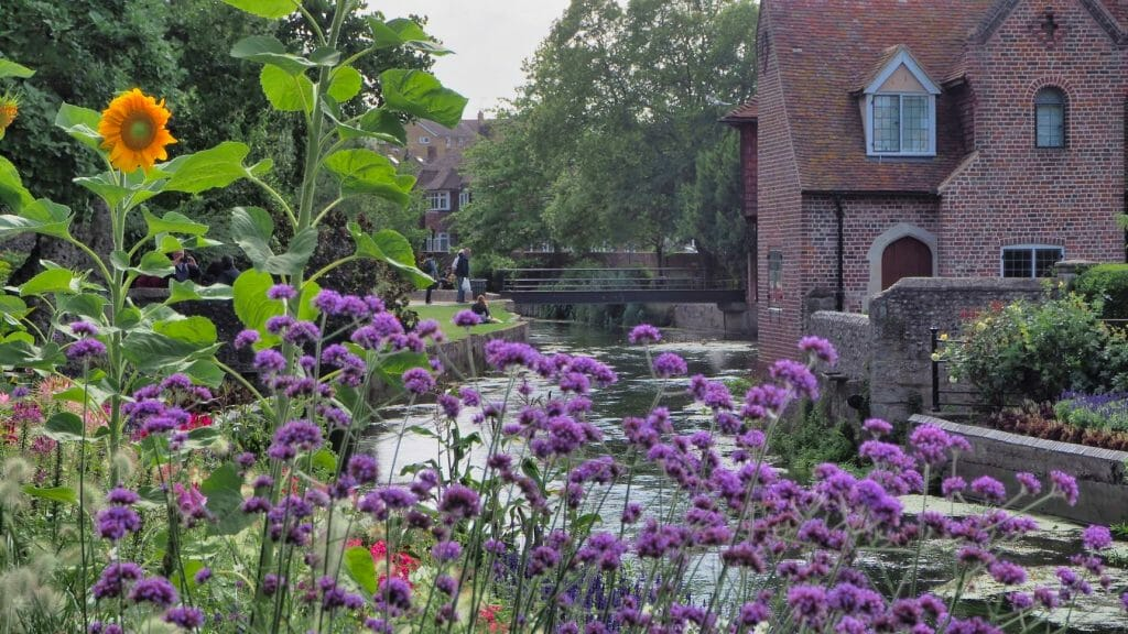Purple flowers in front of a river with an old building on the other side and people looking in the river in things to do in Canterbury