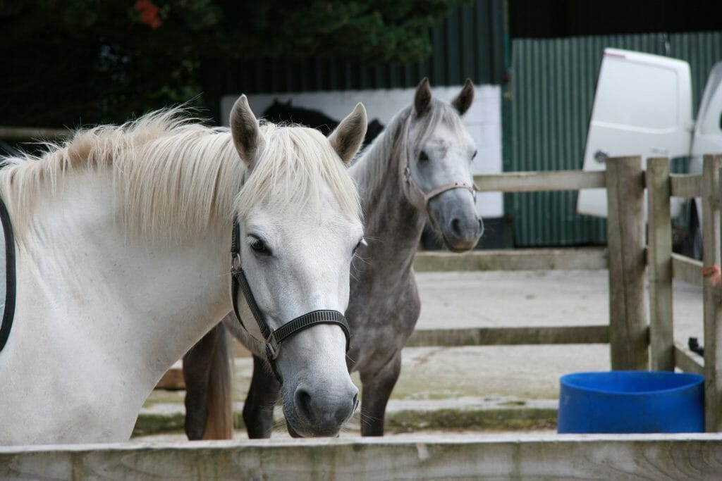 Horses in a stables in Snowdonia