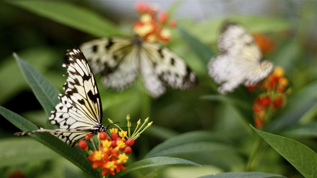 Butterflies on plants at Pili Palas Nature World
